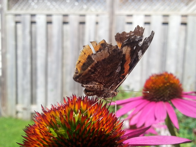 Butterfly in the mystical Garden