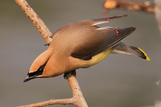waxwing Brooks, AB