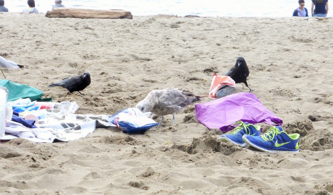 Uninvited guests Kits Beach, Vancouver, BC