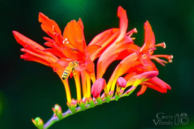 Flower On Fire Dartmouth, NS