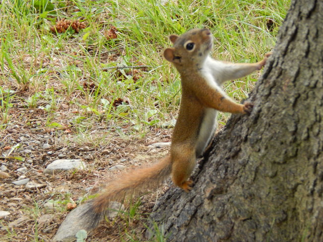 Who has my nuts!!! Maltais, NB