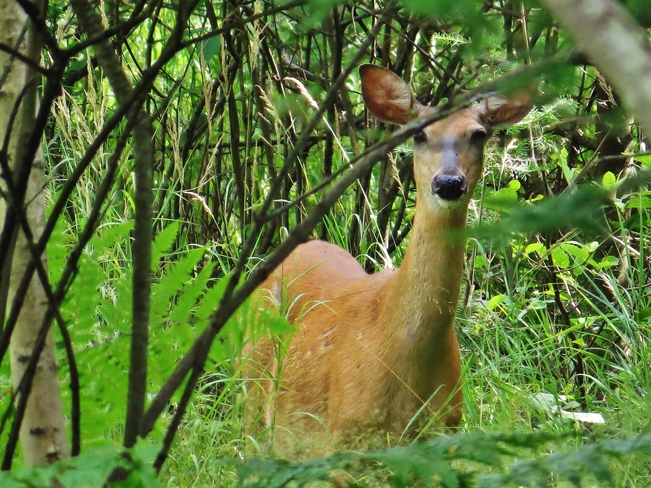 Concerned Doe with cute fawn. North Bay, ON