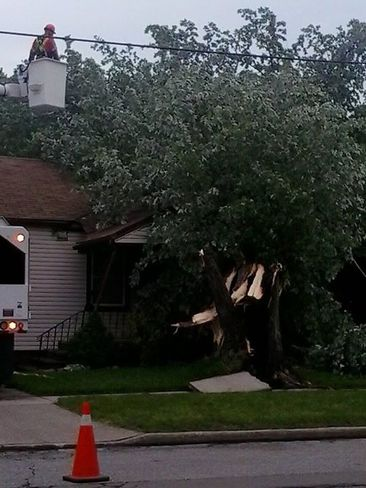 lighting hit tree and fell on house Windsor, ON