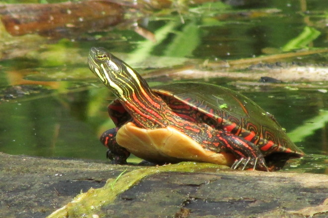 turtle Pinery Provincial Park, Grand Bend, ON