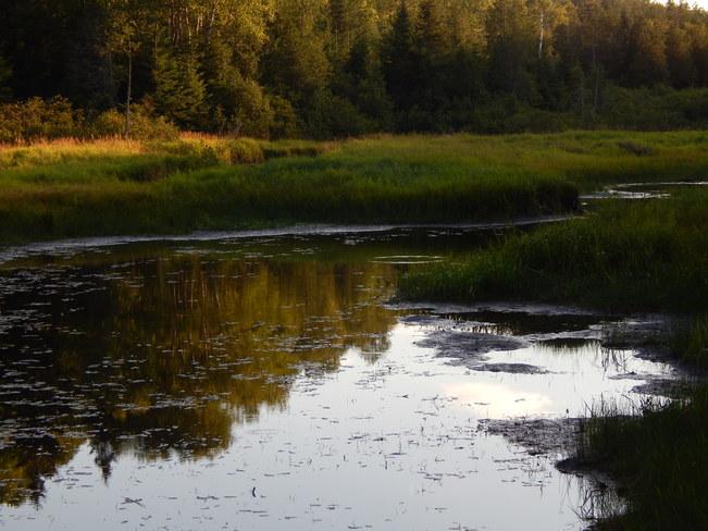 The beaver dam Maltais, NB