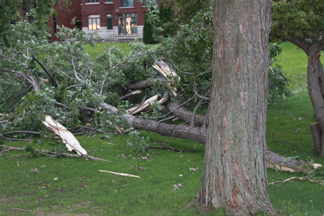 Storm of August 26, 2014 implanted a large limb in the second floor of house. Puce, Lakeshore, ON