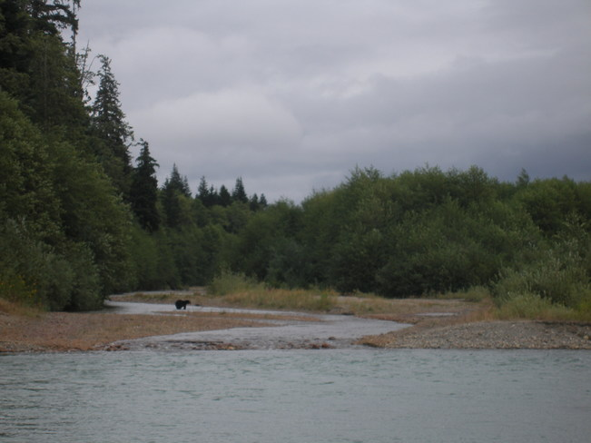 Black Bear Kitimat, BC