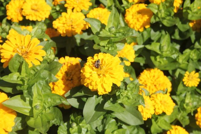 Bee at Work Winnipeg, MB