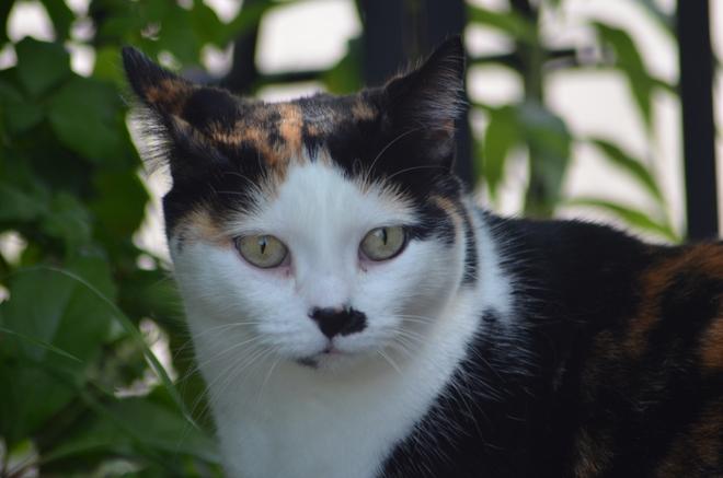 My wifes cat Granite House, Caledon Ontario