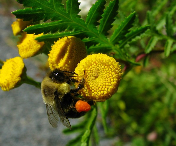 """""""Don't Worry, BEE Happy"""" Halifax, NS"""