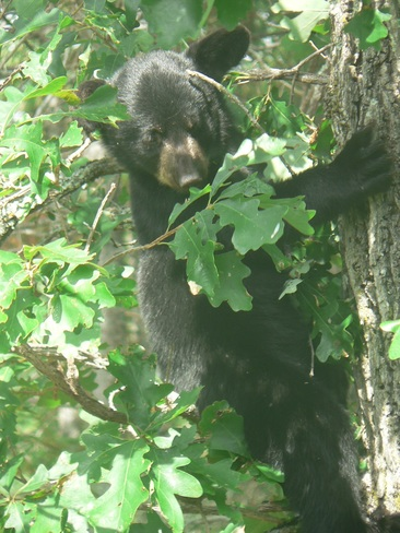 Bear Cub ! Channel Island, Lake of the Woods, Kenora, Unorganized, ON