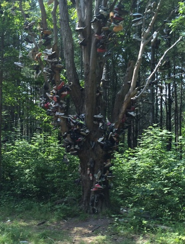 The Shoe Tree Unnamed Road, ON L0K, Canada