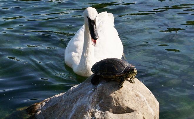 Tough Guy... Scarborough, Toronto, ON