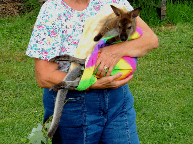 oh look.. a Wallaby..... Perth, ON