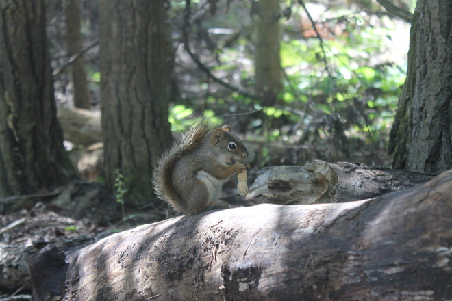Posing for Peanuts Bruce Peninsula National Park, Tobermory, ON