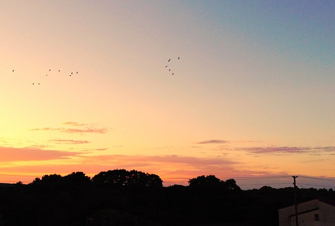 Beautiful Sunset, with Birds Flying By Orillia on