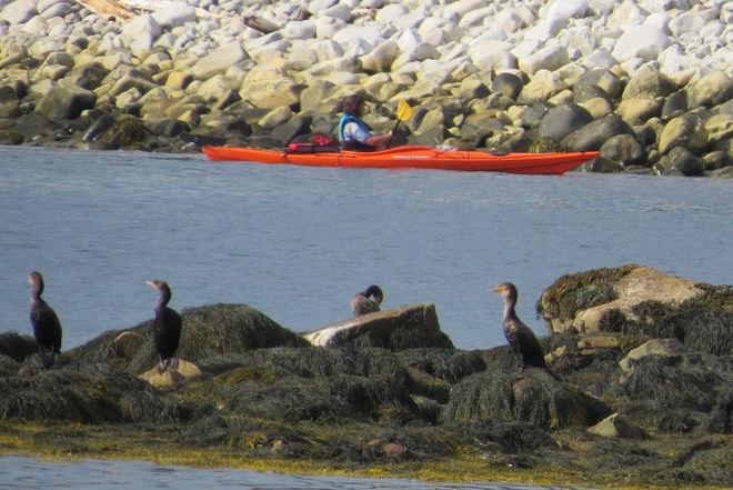 Entertainment For The Cormorants, Yeah! Indian Harbour, NS