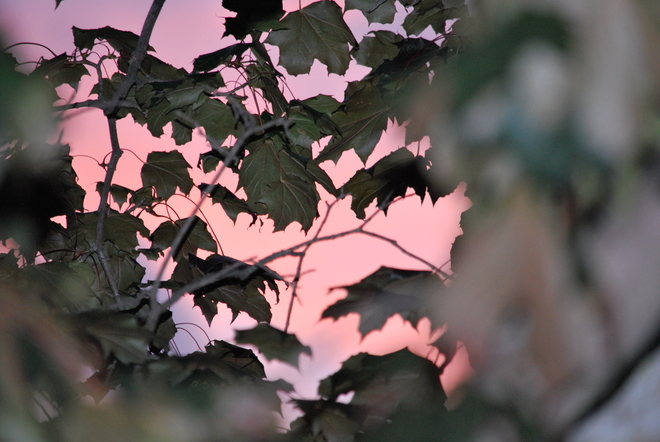 Late summer pink sky... Oshawa, ON
