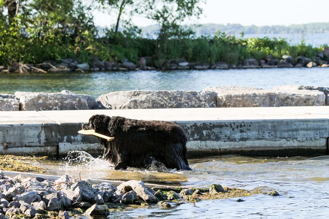 I am going back for the canoe next....... Kingston, ON