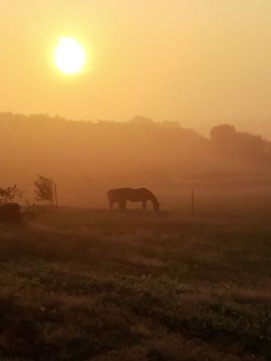 crisp foggy morning