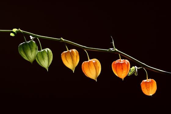1a. The Lanterns