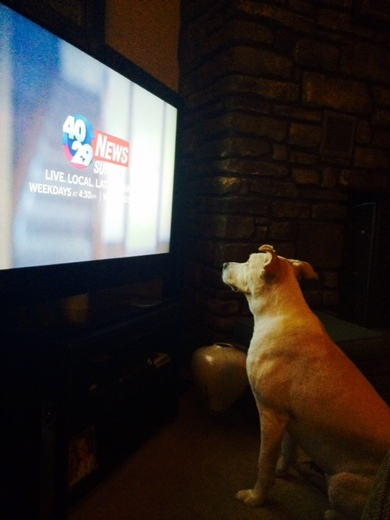 Our sweet Aspen...Watching her favorite news station!