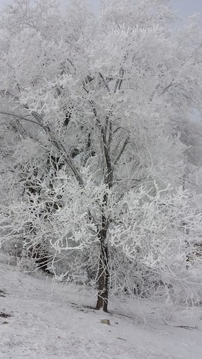 This tree was wrapped in a cacoon of ice