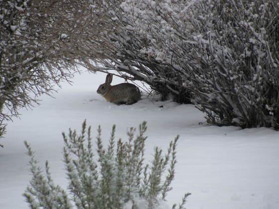 Mr. Bunny Rabbit