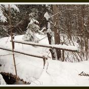 Pont en forêt...