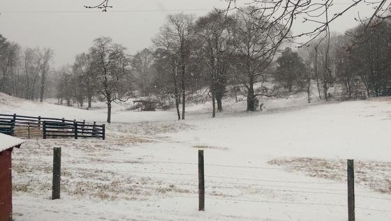 Still snowing in Pilot Mtn