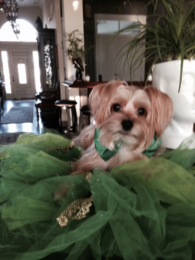 HAPPY ST. PATRICK'S DAY FROM KHLOE