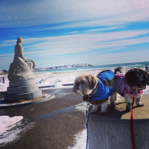 Doggies at Hamopton beach
