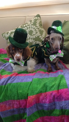 Happy Saint Patrick's Day, from Kitty Faulkenberry, Ponchatoula