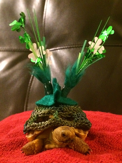 Happy St. Patrick's Day!! -from Boris Dinosaurus Maloney-Gallagher :)