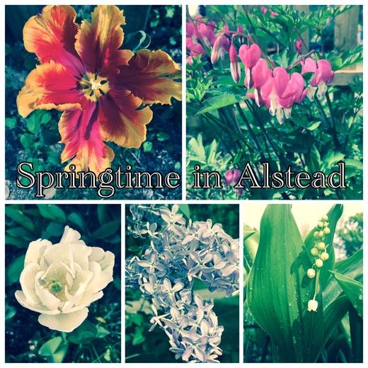 Springtime in Alstead