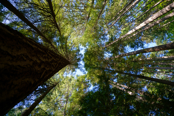 Image result for bowen island forest