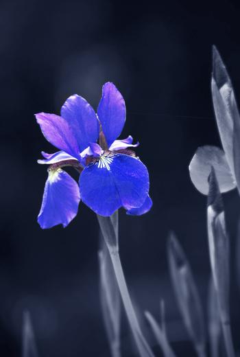 Spring Variations