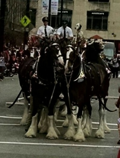 "Opening day parade "" the Clydesdales"""