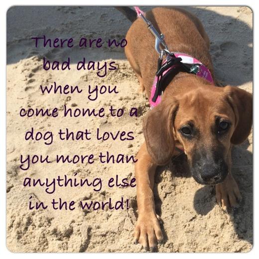Happy Dog Day!!!!