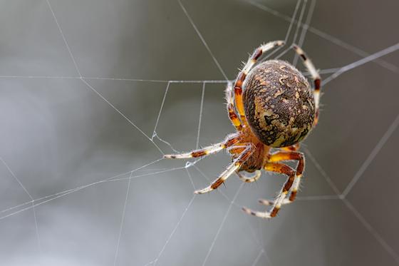 2b. Spider web