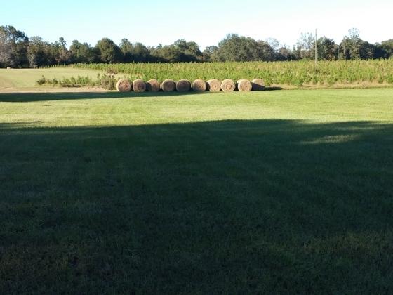 Washington Parish Harvest Time