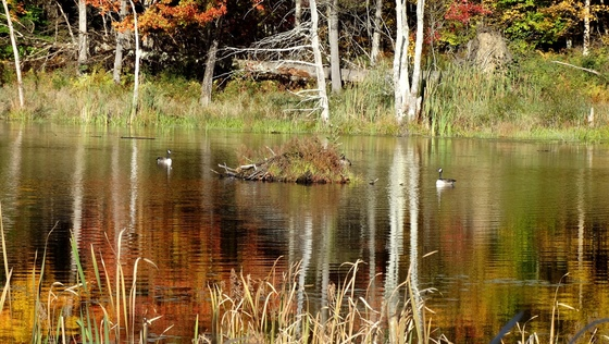 Sabin Pond and Unknown Pond Reflections