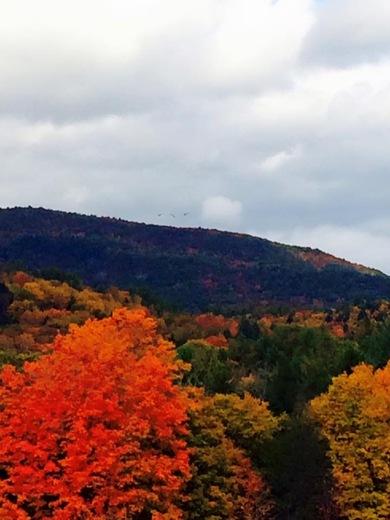 Fall photos Springfield VT