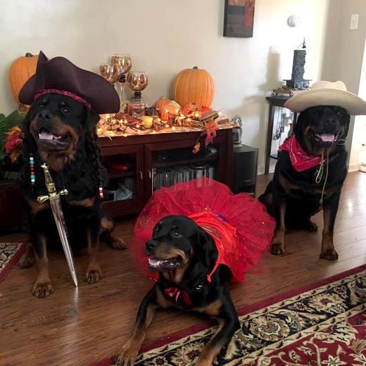 Halloween Pack - 2015