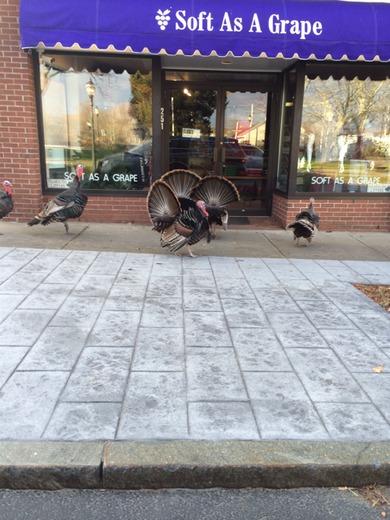 Thanksgiving Morning Turkey Trot!