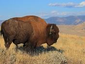 Fan Favorite Winner   Yellowstone National Park