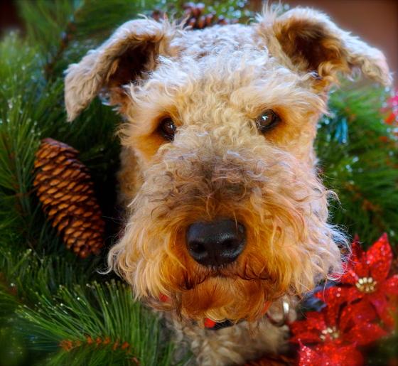 Merry Christmas CG!!