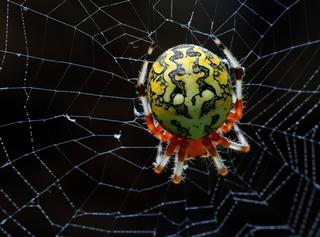 Spider Sep 28 2015
