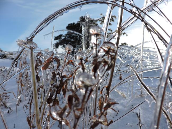 Ice Coat Birchy Bay, NL