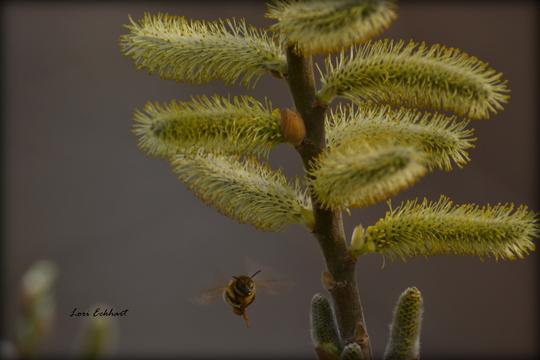 Bee in February
